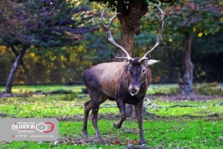 پارک جنگلی سیاه داران و سورتمه تالش