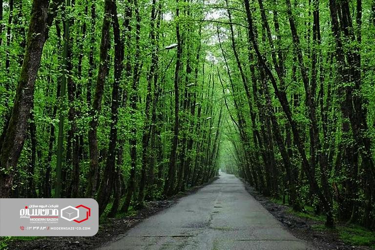پارک جنگلی صفرابسته ، تونلی سبز منتهی به آبی دریا