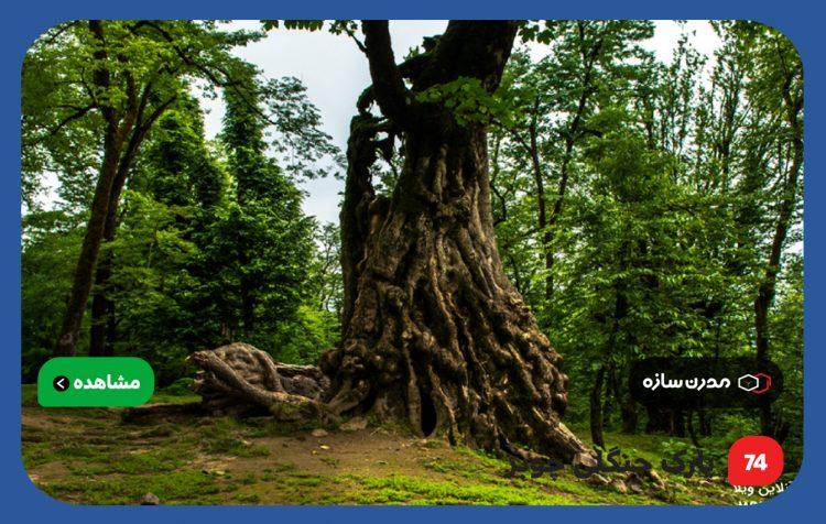 پارک-جنگلی-چوبر